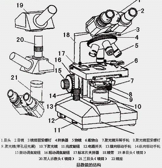 显微镜的使用方法步骤及用途