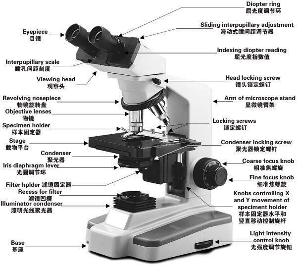 显微镜的使用步骤及正确使用显微镜的方法