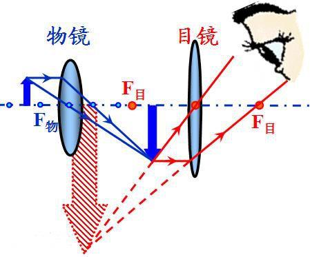 光学显微镜的原理